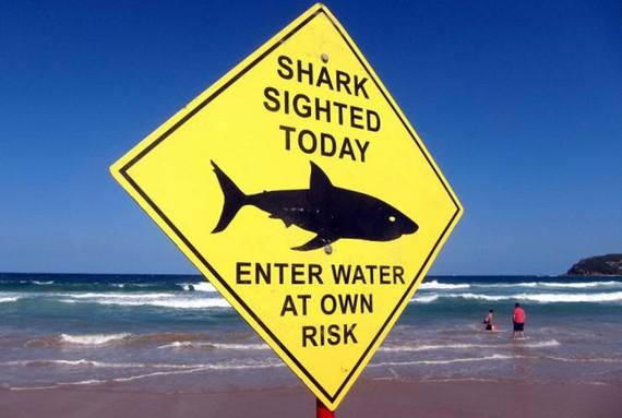 Dùng drone cảnh báo cá mập