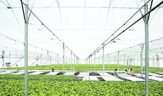 Chỉ trong vòng 24 tháng, VinEco đã xây dựng và phát triển thành công 14 nông trường quy mô và chuyên nghiệp trên cả nước