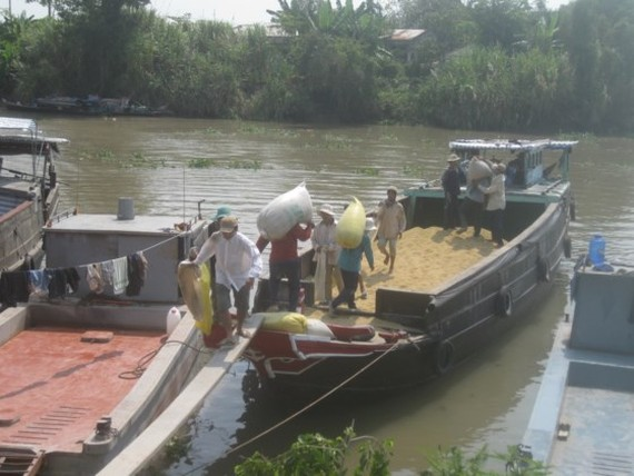 Rice bags transported aboard in the Mekong Delta (Photo: SGGP)