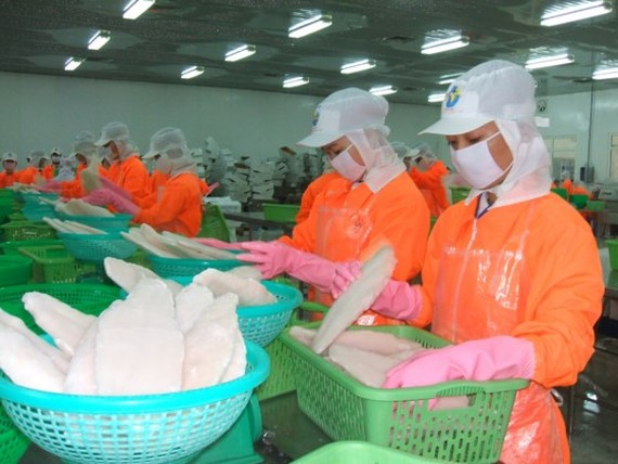 Workers at a pangasius fish processing plant in the Mekong Delta. The fish export slightly increased in the first five months this year (Photo: SGGP)
