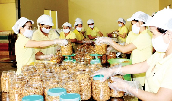 Workers prepare salted shredded meat jars for export (Photo: SGGP)