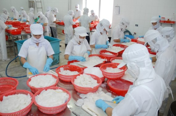 A shrimp processing plant in the Mekong Delta of Vietnam (Photo: SGGP)