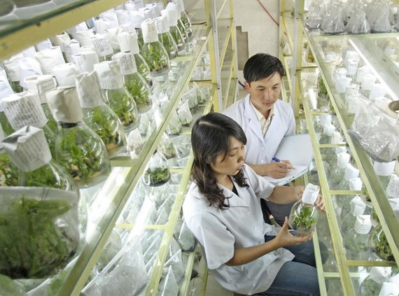 A high-tech nursery in Lam Dong Province. (Photo: VNA/VNS)