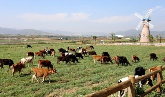 Organic Da Lat farm, the first one meeting European standards in Vietnam (Photo: SGGP)