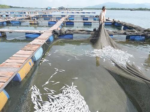 Fish death in the Cha Va river (Photo: SGGP)