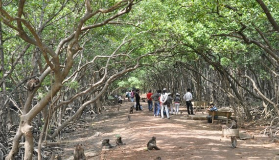 Visitors at Monkey island in Can Gio district
