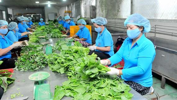 Sản xuất nông nghiệp theo mô hình liên kết sản xuất HTX tại huyện Bình Chánh. Ảnh: CAO THĂNG