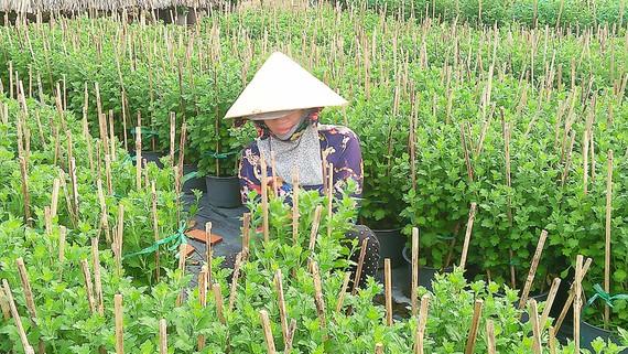 Người trồng hoa làng Kim Dinh phấn khởi vì giá hoa được mùa