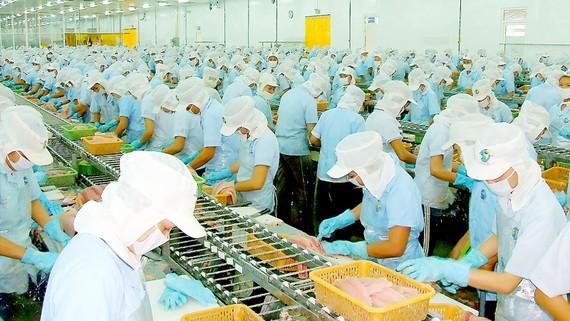 Chế biến cá tra xuất khẩu ở An Giang