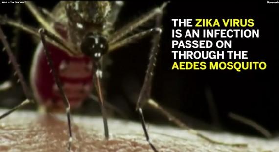 寨卡病毒主要通過伊蚊叮咬進行傳播。(資料圖來源:視頻截圖)