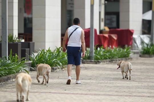 違規放養犬隻將被處罰。(示意圖源:黃潮)