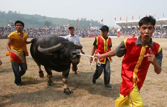 若組織工作妥善,圖山鬥牛盛會將會成為旅遊產品。