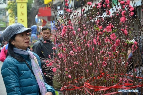 外媒報道越南春節氣氛