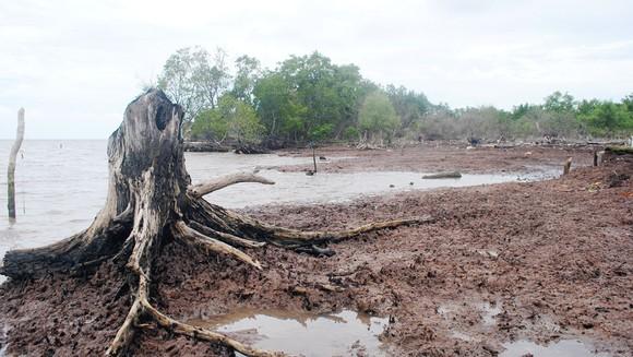 Bờ biển của tỉnh Cà Mau bị sạt lở
