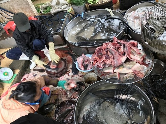 Fish sold at Hanoi's Dong Xuan Market. (Source: VNA)