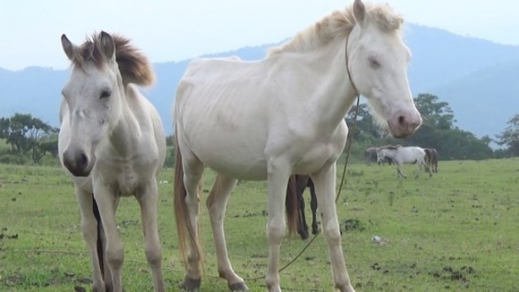 Vietnam's largest grassland where horses live