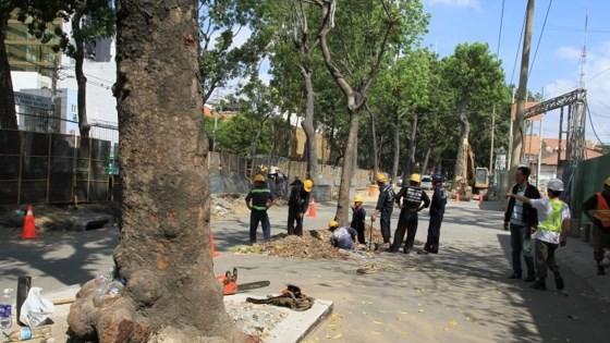 HCMC removes trees for bridge construction