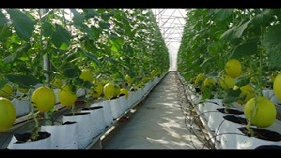 Only 1.6 percent of farms adopt hi-tech