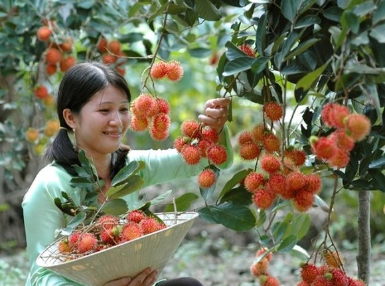 Vietnam signs rambutan export deal with New Zealand