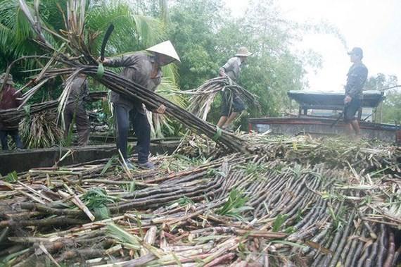 Vietnam not to build more sugarcane plant
