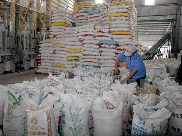 The Vietnam Food Association aims to ship 2 million tonnes of rice to foreign countries in the last five months of the year, increasing total rice export for the whole year to 5.2 million tonnes. (Photo: VNA)