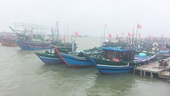 Fish vessels anchor near seashore