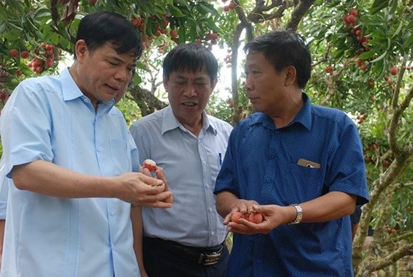 Minister of Agriculture and Rural Development Nguyen Xuan Cuong (L) arrives in Luc Ngan district, Bac Giang province to promote the consumption of lychee.