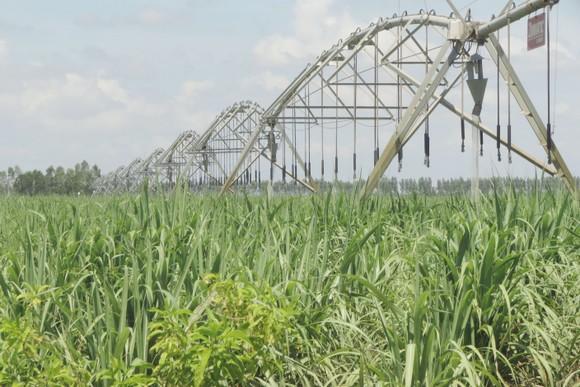 Tây Ninh đột phá đầu tư phát triển nông nghiệp ảnh 1