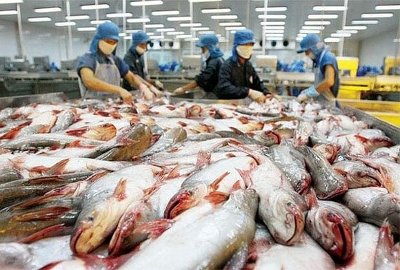 Pangasius fish export tops $1.75 billion