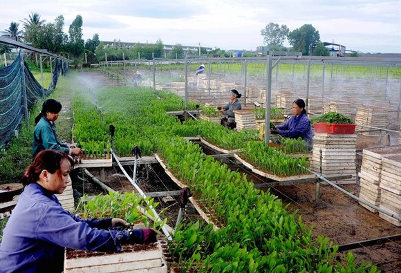 Workers nurse seedlings at Nguyen Hanh Plantation Service Company in the central province of Binh Dinh. (Photo: VNA/VNS)
