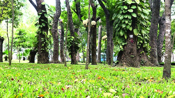 Những bóng mát của cây cổ thụ  trong công viên. Ảnh: N.HÀ