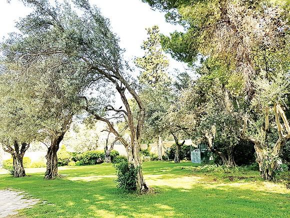 Jerusalem yên bình ảnh 4