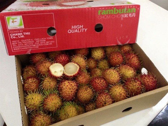 Việt Nam are set to begin exporting rambutans to New Zealand after years of trade negotiations between the two countries.— Photo gocom.vn
