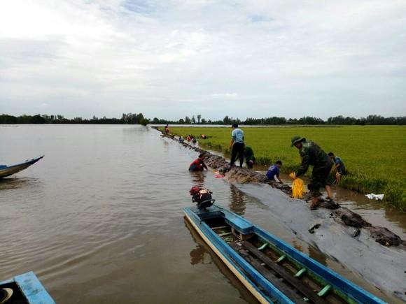 ĐBSCL khẩn cấp gặt lúa chạy lũ ở vùng biên giới  ảnh 2