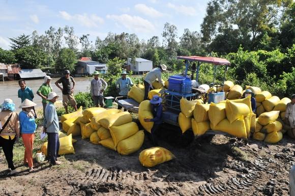 ĐBSCL khẩn cấp gặt lúa chạy lũ ở vùng biên giới  ảnh 10