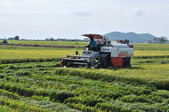 ĐBSCL khẩn cấp gặt lúa chạy lũ ở vùng biên giới  ảnh 7