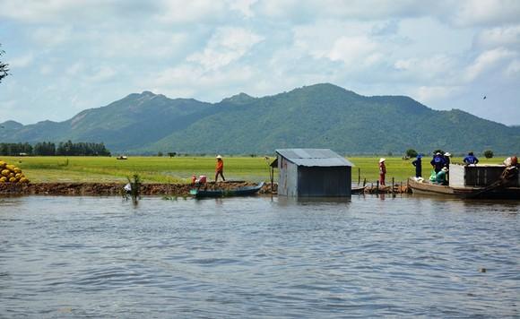Hàng ngàn ha lúa thu đông ngoài đê bao ở An Giang bị lũ uy hiếp