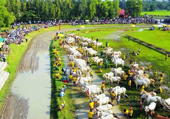 Hàng chục ngàn người xem đua bò Bảy Núi ảnh 2