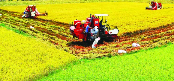 Mekong Delta  boosts agricultural mechanization to enhance productivity. (Photo: Sggp)