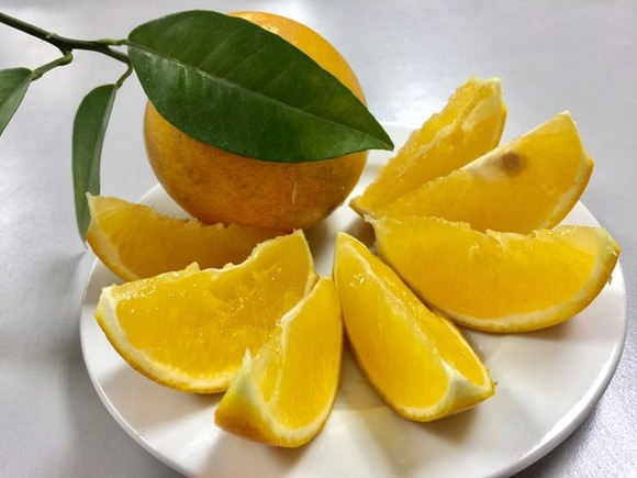 Cao Phong orange, a speciality fruit of northern Hoa Binh province. (Photo: VNA)