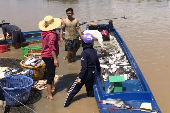 Cá bè La Ngà lại chết trắng sau mưa lớn ảnh 1