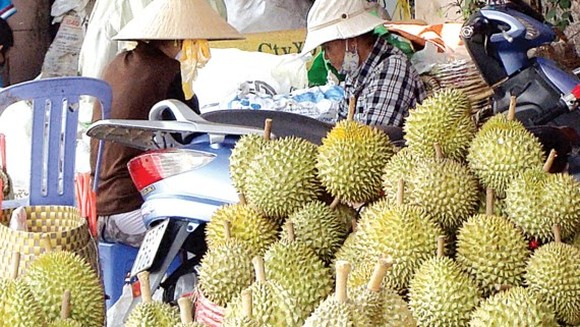 Bumper crop, durian price in Dak Lak province hits record