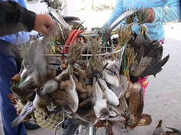 The wild bird trade is popular in Vietnam (Photo: nld.com.vn)