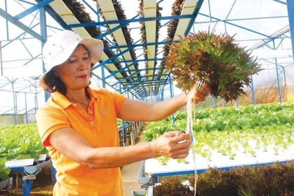 Thirty agricultural projects enter final round