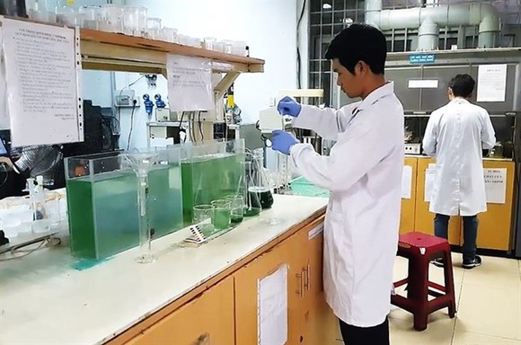 A group of nine students in HCM City have successfully grown spirulina indoors, and are selling the know-how to others who want to grow the super food at home (Photo VNA)