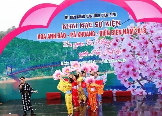 Dien Bien hosts first cherry blossom festival