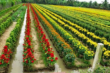 A corner of Sa Dec flower village (Photo: Tri Vien )