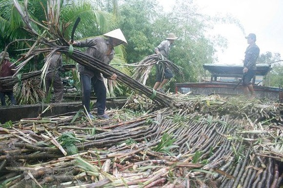 Vietnam not to build more sugarcane plant