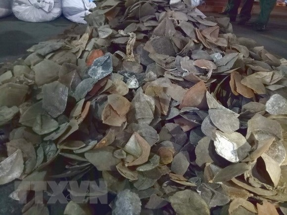 The pangolin scales seized at Cat Lai port (Photo: VNA)