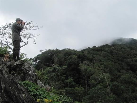 A corner of forest in the Central Highlands region of Vietnam (Photo: VNA)